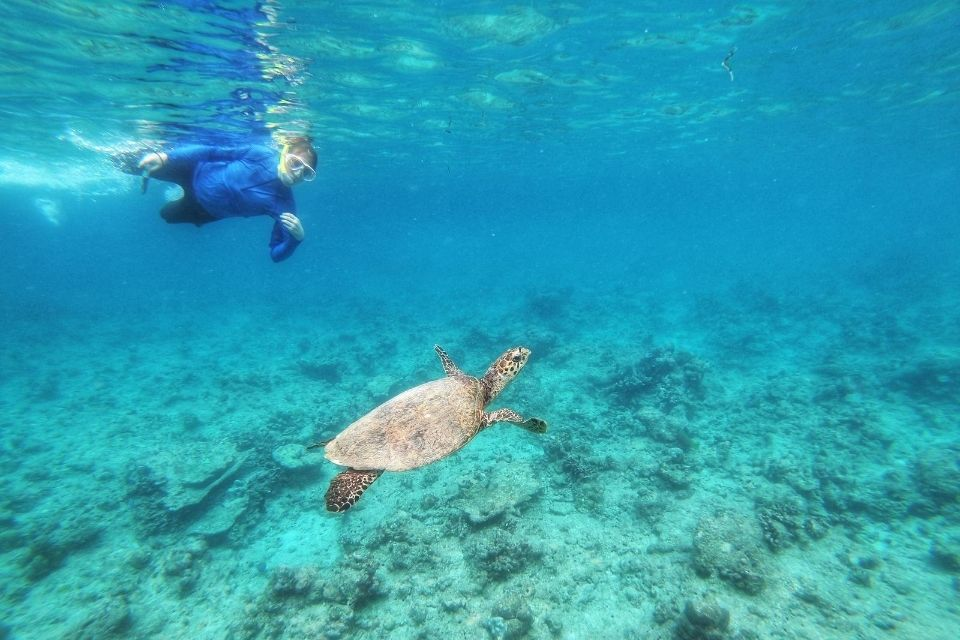 Maldives 3 Point Snorkeling Excursion