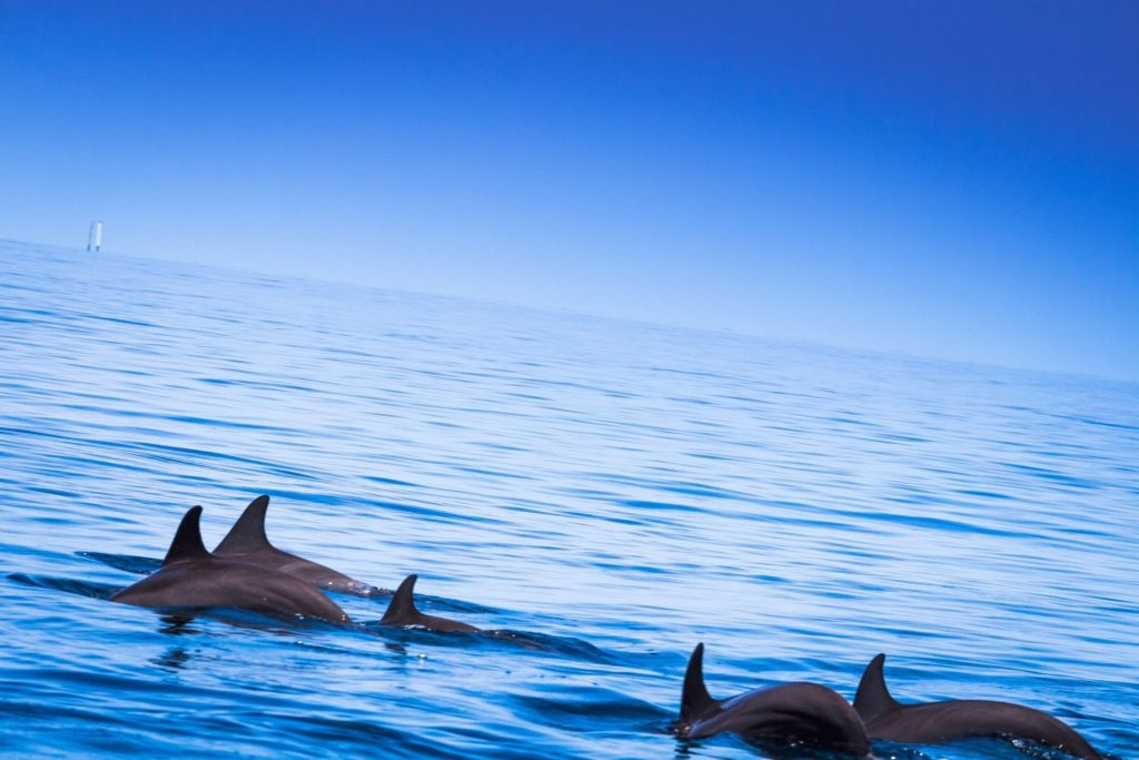 Sunset Dolphin Cruise in Maldives for Non Swimmers